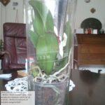 Grote bloemenvaas (waarin een orchidee zit) met tekst-lint ter herdenking van een 40 jarig huwelijk. Vaas is ca 50cm hoog Prijsindicatie € 295,--